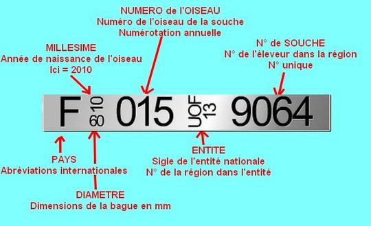 Diametre bague youyou