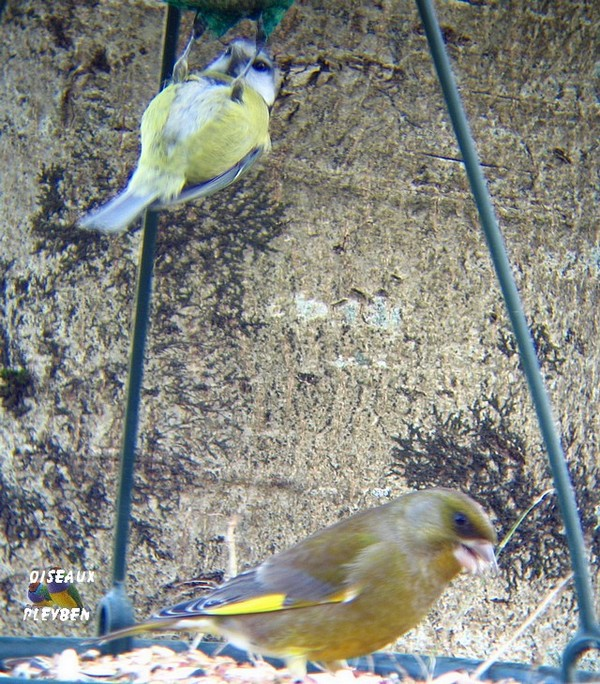 Fabriquer mangeoire pour oiseaux du jardin - Fabriquer mangeoire pour oiseaux du jardin ...